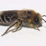 Call our Oceanside bee exterminators today! 000-000-0000