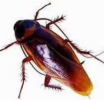 Call our Oceanside cockroach exterminators today! 000-000-0000