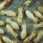 Call our termite exterminators today! 000-000-0000